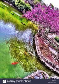 japanese tea garden san antonio stock photo royalty free image