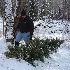 utah christmas tree permits home design inspirations