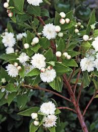 44 best flowers for a fairy u0027s garden images on pinterest fairies