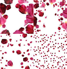 flower petals 4 png flower petals falling overlays
