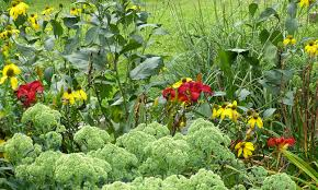 flower gardening tips u2013 time saver for moving plants flower