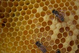 colony cycle of the hive a healthy life for me