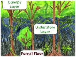 Under Canopy Rainforest by What Is It Like In The Rainforest Thinglink