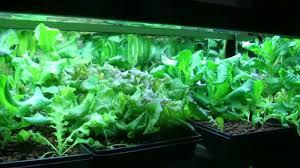 diy vermicomposting with hydroponics vermiponics youtube