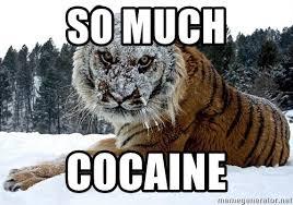 So Much Cocaine Meme - so much cocaine cocaine tiger meme generator