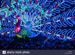 the illuminated peacock lights display seasonal