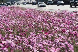 Curb Appeal Atlanta - atlanta highways blooming as georgia dot seeks to improve u0027curb