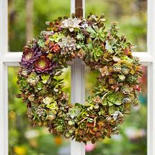 succulent wreath how to make a succulent wreath