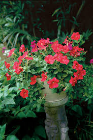 Flower Pot Arrangements For The Patio Spectacular Container Gardening Ideas Southern Living