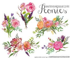 Peony Flower Peonies Watercolor Clipart Illustrations Creative Market
