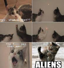 Cat Alien Meme - funny cat memes aliens meme the cat edition funny cats and