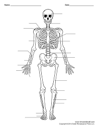 best 25 human skeleton labeled ideas on pinterest human