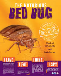 I Found A Bed Bug Now What 28 Best Bed Bug Job Study Images On Pinterest Bed Bugs 3 4 Beds