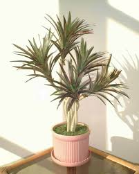 2ft yucca palm artificial tree without pot read more reviews