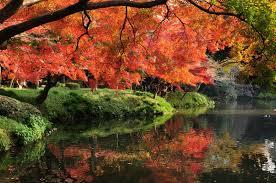 koishikawa korakuen gardens u2013 your guide to real japan
