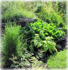 calgary garden coach my back shade garden