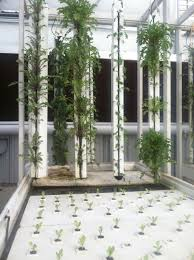 Tips For Designing A House 7 Tips For Designing An Aquaponics Greenhouse Ceres Greenhouse