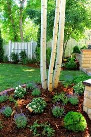 Small Trees For Backyard by Best Small Trees For Landscape Small Trees For Front Yard