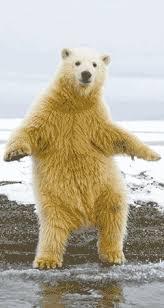 Dancing Bear Meme - dancing bear gif 12 gif images download