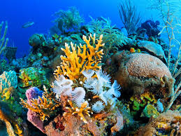Coral Reefs Of The World Map by Cuba U0027s Coral Reef The Best We U0027ve Never Seen Travelchannel Com
