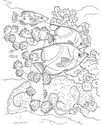 15 best ocean life images on pinterest coral reefs drawings and