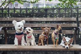 the fast furry rise of the instagram famous pet racked