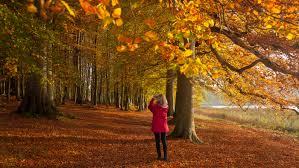 Autumn Colors Dazzling Autumn Colour Displays National Trust