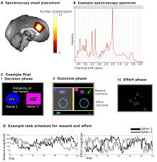 excitation and inhibition in anterior cingulate predict use of
