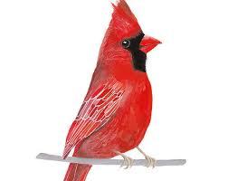free printable bird wall art bird print cardinal bird printable bird wall printable bird wall