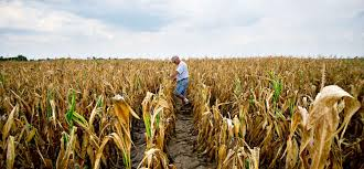 midwest drought dry weather depletes small businesses inc com