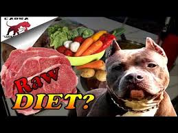 american bully raw dog food diet how to get started let u0027s go