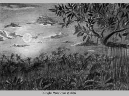 image gallery jungle pencil drawing