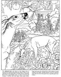 backyard animals coloring pages printable coloring sheets