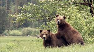 Animal Planet Documentary Grizzly Bears Full Documentaries - documentaries pacific wild