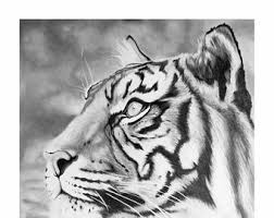 tiger drawing etsy