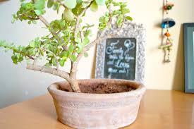 pot bonsai design design decor u0026 disha diy bonsai planter