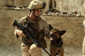 belgian sheepdog vs german shepherd the heart wrenching story behind four legged flick u0027max u0027 new