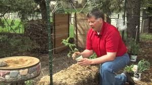 straw bale gardening youtube