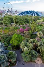 Botanical Gardens In Singapore by 8 Fun Things To Do In Singapore With Kids Where To Eat U0026 Sleep