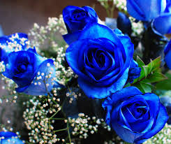 Blue Flowers - pictures of blue flowers bright blue against a background of