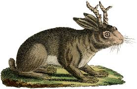 vintage rabbit vintage rabbit with horns image the graphics fairy
