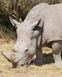 sle resume journalist position in kzn wildlife ezemvelo accommodation 6 rhino killed in just one night in kwazulu natal reserve news24