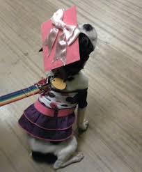 dog graduation cap and gown pet graduation caps