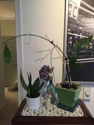 tips for growing night blooming cereus dan gill u0027s mailbag nola com
