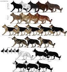 australian shepherd coat colors image german shepherd color chart png herding dog farms game