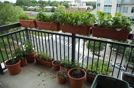 watering balcony herb garden ideas 723 hostelgarden net