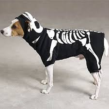 Funny Dog Costumes Halloween 12 Dog Costumes Images Animals Costumes