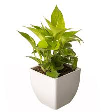 images of plants plants store buy plants online at best prices in india browse