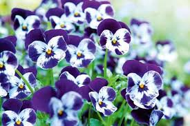 Best Plants For Hanging Baskets by Best Drought Resistant Plants For Hanging Baskets Stuff Co Nz