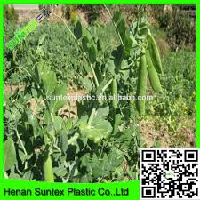 climbing plant support mesh apollo pea u0026 bean net buy plant